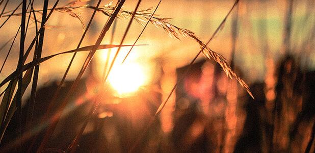 player_sunset_80